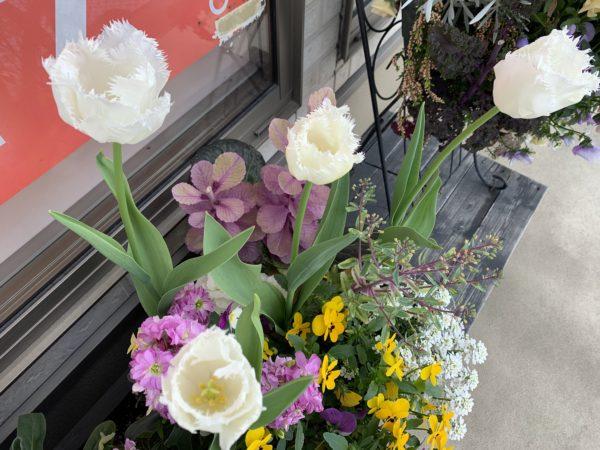 花たちには悩み事はなく春の訪れで咲き誇っています。チューリップが特別に綺麗に咲きました。