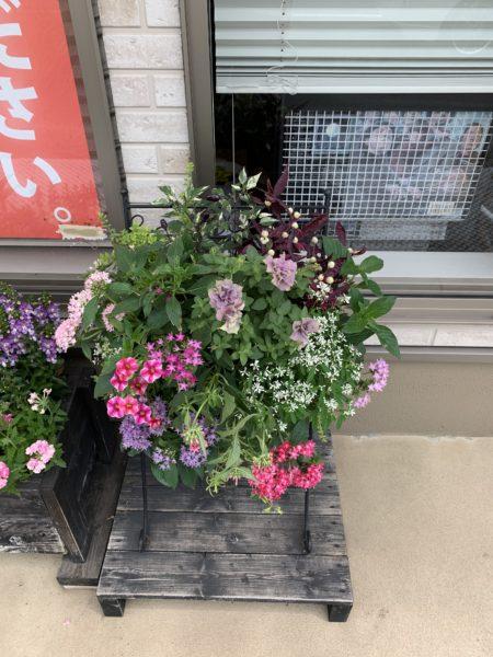 KIT花工房さんに花壇の花を入れ替えていただきました。